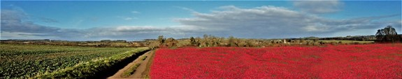 BANNER Byfield Pan With Poppies